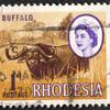 ローデシア共和国 アフリカ水牛 1ペニー