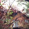 世附川ロッジで秋キャンプ(前編)