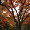 紅葉&野鳥撮影