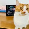 【愛猫家のレビュー】泣きたい私は猫をかぶる