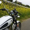 ライダーへの道 ひよっこライダー編【バイクと菜の花とわたし】