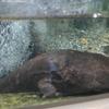 上野動物園、両生爬虫類館。両生類編。