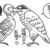鵜の目、鷹の目