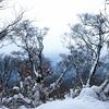 雪山登山の失敗Ⅱ