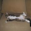 猫との出会い(1)
