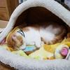 【猫画像】えんは丸くなる【ペット】