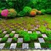京都・東山 - 東福寺 方丈庭園のサツキ