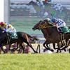 【2017年1月8日JRA穴馬券予想】中山競馬(フェアリーS:G3)・京都競馬(シンザン記念:G3)他の買い目