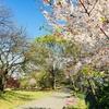 日吉公園でピクニック