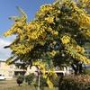 木の花たち