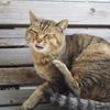『猫好き必見』島ネコの写真の撮り方教えます!!