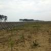 100年後の森を作るプロジェクト