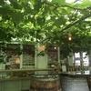 栃木のココファームワイナリーに美味しいワインを求めて、大人の遠足