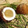 ココナッツオイルが純粋な毒というのは嘘!安全性と効果について