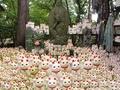 外国人が撮影しに来る招き猫の絶景があるお寺 豪徳寺