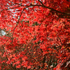 瑞宝寺公園の紅葉(兵庫)