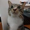 『ジブン手帳公式ガイドブック』に風ちゃんの写真が載りました!