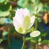 大阪での瞑想セミナー