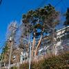 杉並区の小学校の木々は立派(かも)