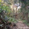 松くい虫の倒木処理