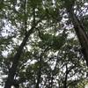 【広島県内のオススメ無料キャンプ場】ソロキャンプでも周りに気を使わない場所5選