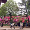 【御朱印プチ情報】根津神社のつつじ祭りが今年は早くも満開続出で見頃ですよ。御朱印帳持ってお出かけください【根津】【千駄木】【東京】