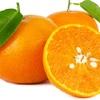 七十二候「橘始黄」