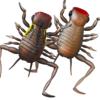 【DAIWA】カエルと虫のハイブリット生命体「キッケルキッカー」発売開始!