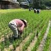 もち米をみんなでゆいゆい作ってます♪