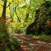 飛騨の秋景色 『大白川』  vol 3