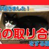 【荷物が届きました。箱の取り合いをする猫たち】