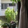 強烈な生存競争があるか!居間の植物たち。