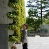 石川・富山美少女図鑑 撮影会! ─ 富山城址公園周辺 2021年4月25日 NARUHAさん その12 ─