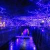 『青の洞窟』イルミネーション行ってきました