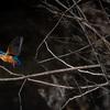 ドットサイトOLYMPUS EE-1 を使い始めたら徐々に飛んでるカワセミが追えてきた:その他鳥撮で試してみたこと