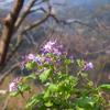春の花達&「俳句王国がゆく」が八幡浜にやってきます♪