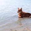 夕陽も忘れる可愛さ!?「海水入浴犬」