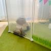 ちまきのウサギ用キャリーは可愛いリッチェルドームキャリー♡