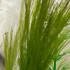 【ヒトリゴト】メダカもエビも繁殖の晩夏