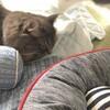 ネコの寝床を衣替え さらばクールマット