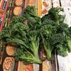 スティックセニョール(茎ブロッコリー)の収穫