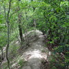 ナガモッコク尾根から赤子谷西尾根のハイキング(その3)赤子谷西尾根