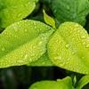 ガーデニング初心者の私が考える、植物を枯らさないで育てる方法