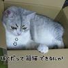 箱猫に・・