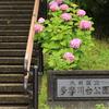 梅雨だ!雨だ!紫陽花だ!多摩川台公園でしっとりとした紫陽花を撮ってきた【2017.06.25】