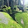 アンコールワット個人ツアー(145)ベンメリア遺跡とアンコールクッキー
