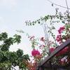 沖縄の国際通りは楽しすぎる!マンゴーぜんざい食べ歩きとお土産屋日記