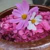 奈良の寺社 般若寺~紫陽花の寺~
