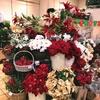 《 本店1階 》クリスマスのお花アイテム一挙紹介!