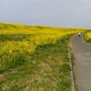 江戸川の春 #江戸川 #春 #菜の花 #グラウンド